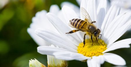 Healing Powers from the Honey Bee
